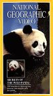 National Geographic's Secrets of the Wild Panda (1995)